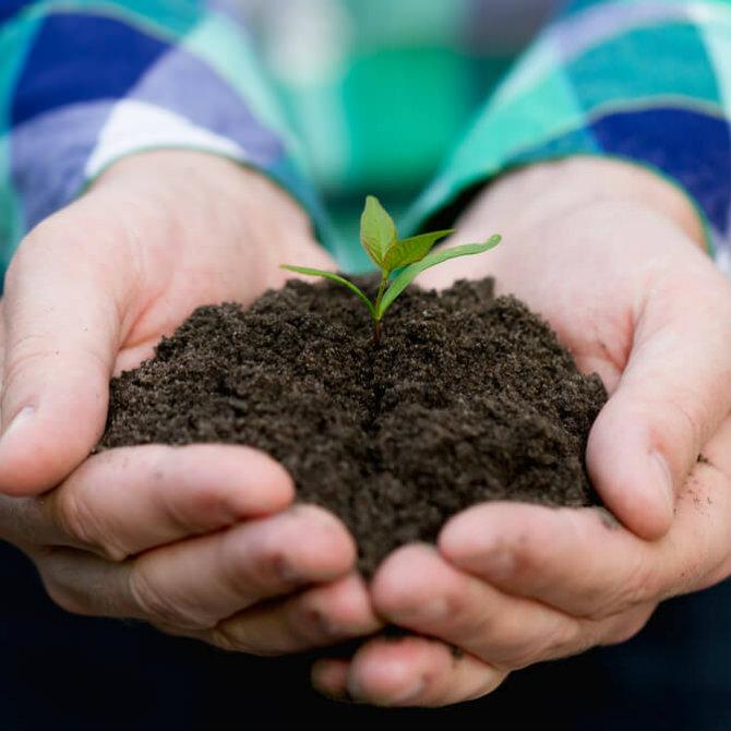 Conheça as áreas de atuação da Gestão Ambiental