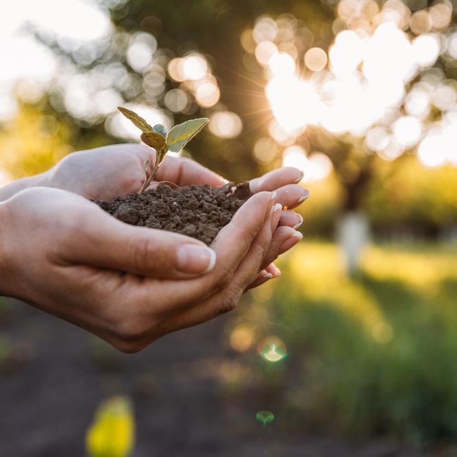 6 cursos para quem quer trabalhar com meio ambiente