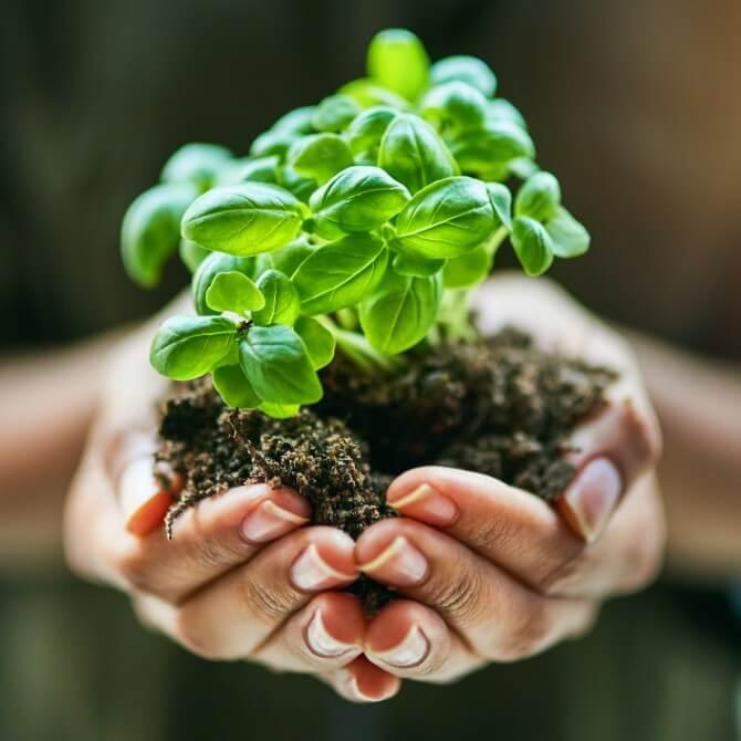 Já pensou em ser um gestor ambiental? Saiba mais sobre essa carreira!